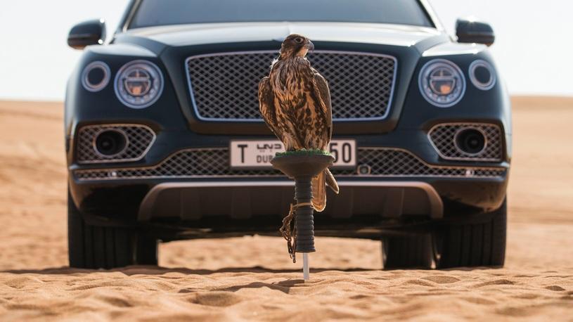 Роскошный кроссовер Bentley Bentayga подготовили к соколиной охоте