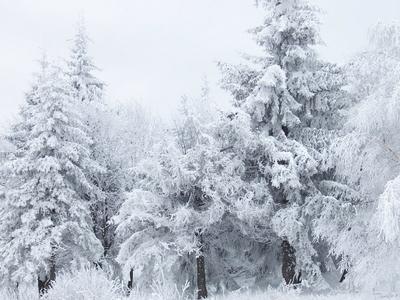 Глобальное потепление: снег в Центральной России ложится на 10 дней позже, чем в середине ХХ века