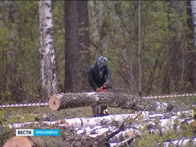 Общественники требуют сократить вырубки леса под строительство объектов Универсиады