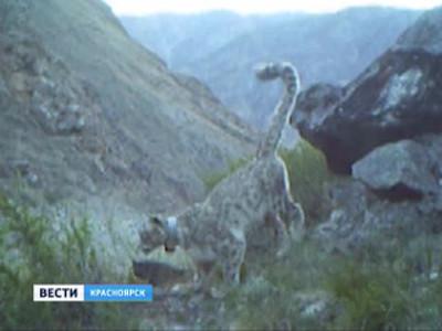 В честь дня снежного барса красноярские альпинисты покорили гору Борус
