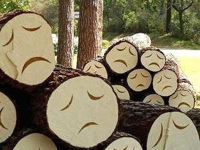 ОНФ: деревья в челябинских заказниках уничтожаются под видом санитарной чистки
