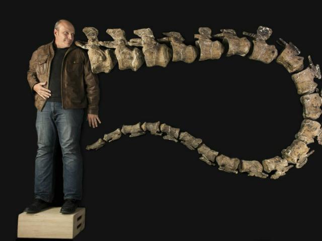 Кеннет Лаковара и девятиметровый хвост Dreadnoughtus schrani (фото Robert Clark, Excel Magazine,Drexel University).