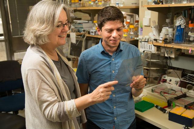 Ведущий автор исследования Вики Лундблад за работой (фото Salk Institute for Biological Studies).