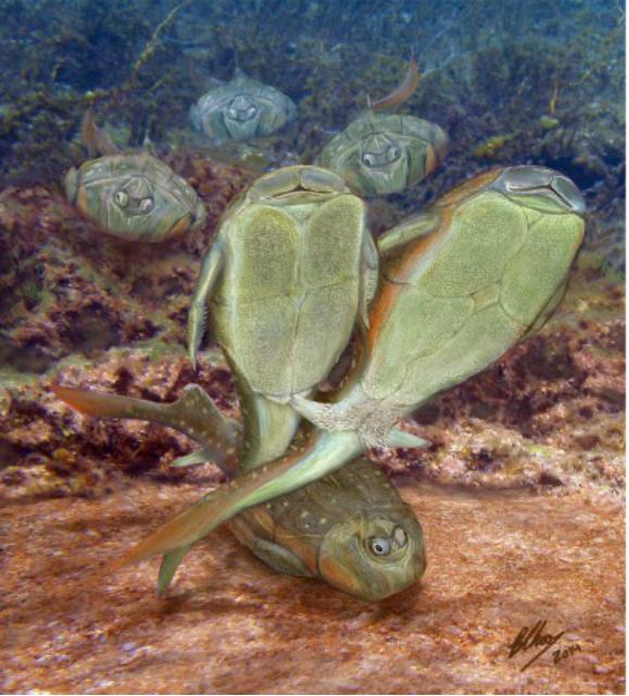 Вымершие рыбы вида Microbrachius dicki (иллюстрация Brian Choo/Flinders University).