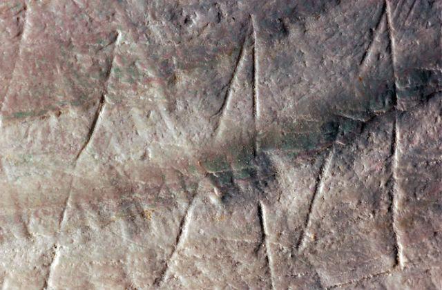 Внутри желобков в раковине остались 500-тысячелетние песчинки (фото Wim Lustenhouwer/Vrije Universiteit Amsterdam).