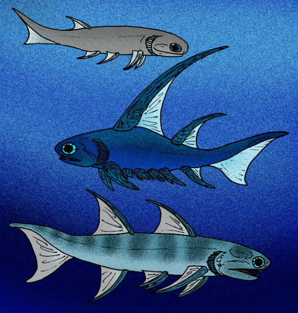 Окаменелость принадлежали рыбам класса колючкозубые (иллюстрация Wikimedia Commons).