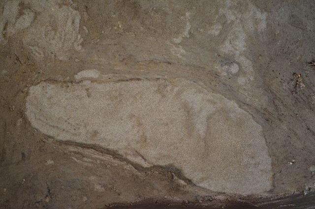 Следы на побережье Балтийского моря оставлены ногами 42-го и 36-го размеров (фото Museum Lolland-Falster) .