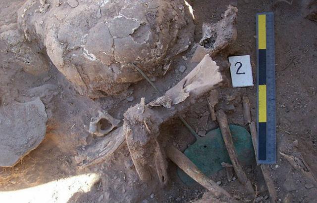 Некоторые тела были разломаны, а кости разбросаны по гробнице (фото Royal Ontario Museum).