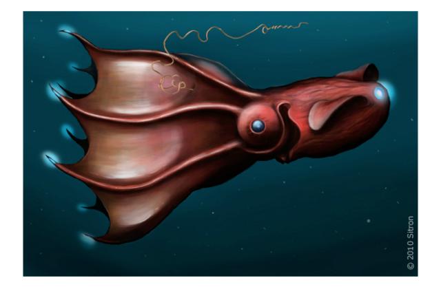 Головоногий моллюск обитает в глубинах умеренных и тропических вод (иллюстрация Карла Хуна (1911)/Wikimedia commons).