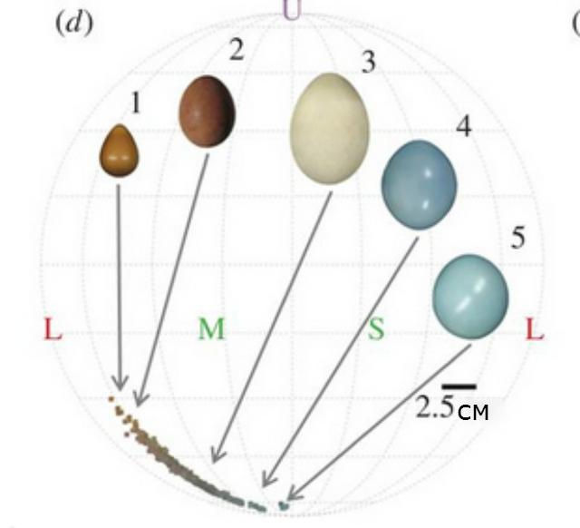 Яйца различных видов птиц (иллюстрация Biology Letters).