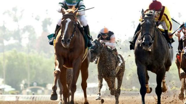 Биологи утверждают, что скаковые лошади ещё не достигли своего эволюционного предела скорости (фото BBC).