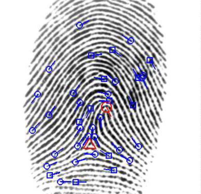 На данном отпечатке помечены те области, что используются при идентификации человека (иллюстрация Anil Jain).