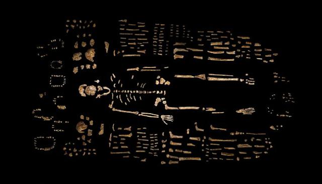 Всего учёные обнаружили около 1500 костей, принадлежащих, по всей видимости, 15 представителям вида (фото Berger et al.).