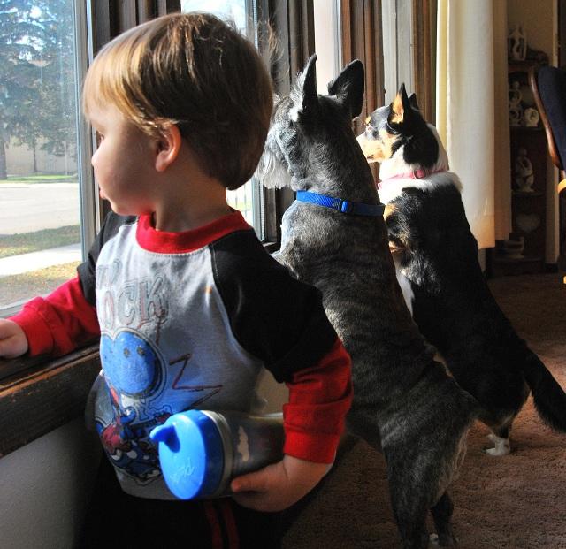 Присутствие собаки или кошки способствует снижению риска заболеть аллергией или астмой в детском возрасте (фото Rick Craig/Flickr.com).