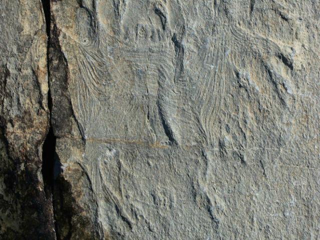 Самые древние мышцы были обнаружены в породе возрастом более полумиллиарда лет (фото Alex Liu).