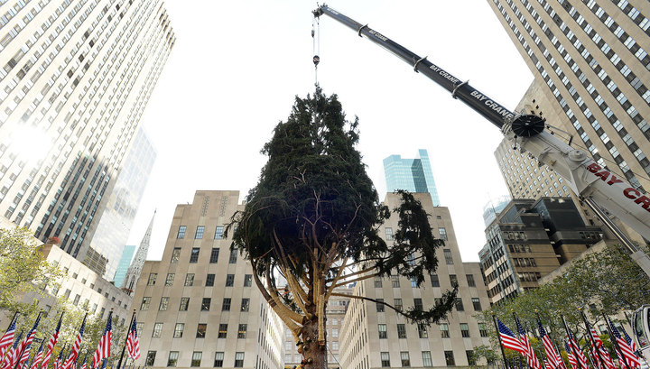 В Нью-Йорк доставлена новогодняя елка весом 13т