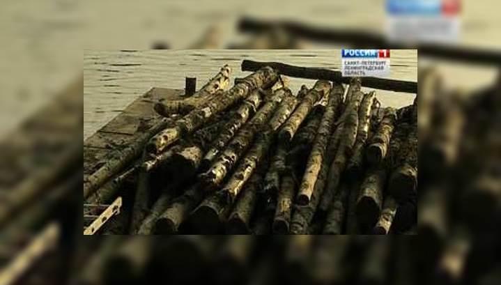На дне Обводного канала обнаружили большие залежи древесины
