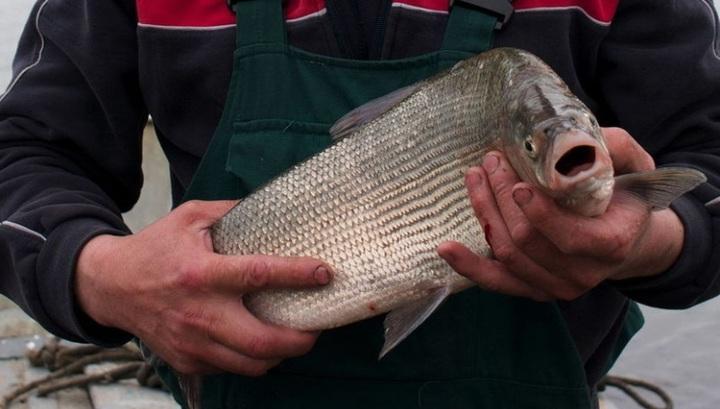 рыбные места на оби:
