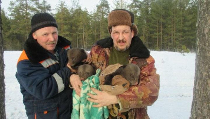 Испугавшись, медведица покинула берлогу, оставив трёх двухмесячных медвежат.