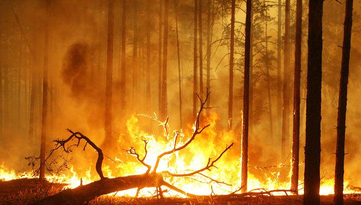 В Забайкалье площадь лесных пожаров возросла вдвое
