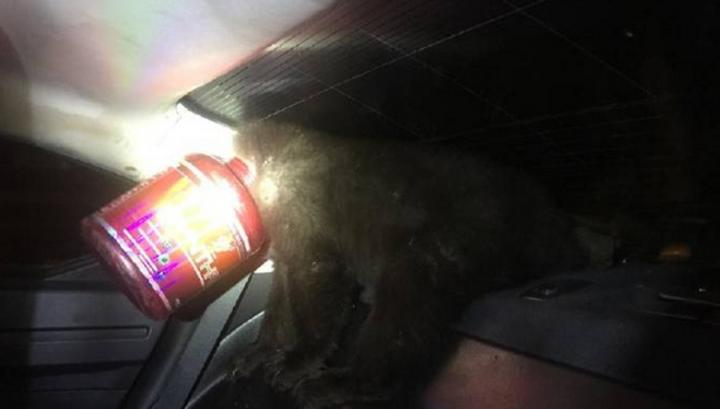 Полицейские спасли медведя, застрявшего в банке из-под протеиновой смеси