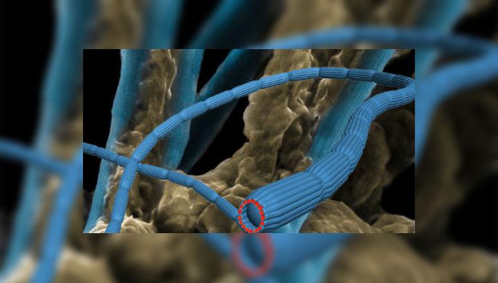 Компьютерная модель кабелей из клеток