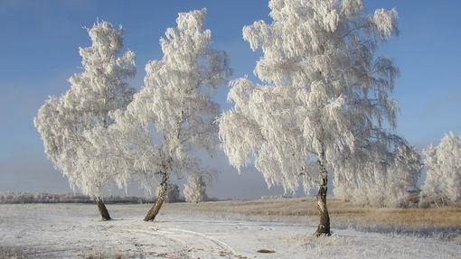 Автор: Сергей Сураев