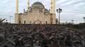 Автор: Дудаев Ахмед