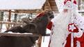 Автор: Пресс-служба Российского Деда Мороза