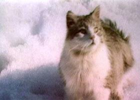 С кошки всё и началось википедия