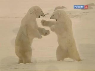 Новости культуры. Эфир от 20.11.2014 (23:05)