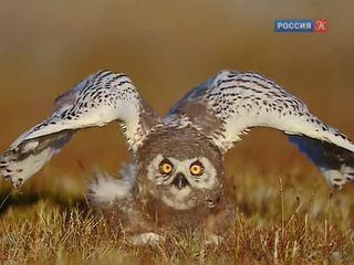 Новости культуры. Эфир от 23.01.2015 (19:00)