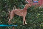Об императорских традициях празднования Рождества рассказывают в Гатчине