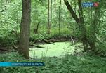 Началось восстановление усадьбы Сергея Рахманинова в Новгородской области