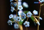 Каменные цветы Виктора Васильева на выставке в Москве