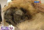 Томография мозга мамонта