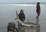 Кабо-Верде. Ловля акул