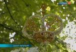 Чисто английское садоводство продемонстрировали в Петербурге