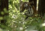Закон природы. Маугли