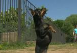 Конкур для собак - нагрузка для хозяина