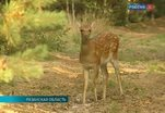 Многочисленные нарушения выявлены в национальном парке Рязанской области
