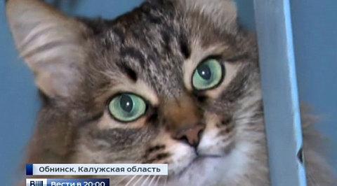 Бездомная кошка спасла подкидыша от гибели