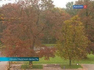 В Ленинградской области начали клонировать деревья
