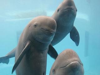 Позывные дельфинов