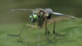 Школа для насекомых