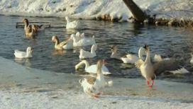 По сравнению с птицами, люди - дальтоники