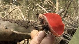 Закон природы. Аленький грибочек