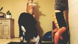 На спортивных тренировках собаки берут пример с хозяина